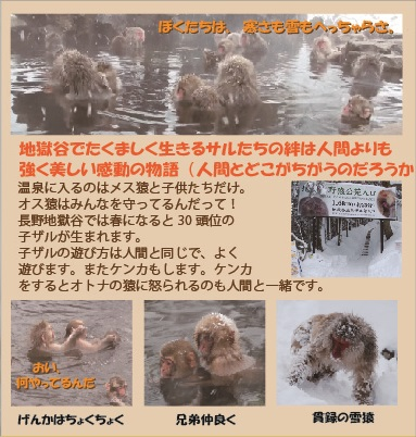 雪猿 Snow Monkey DVD